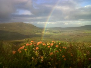 flower-valley-rainbow-300x225