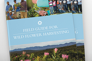 The Field Guide for Wild Flower Harvesting