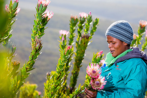 Understanding the fynbos industry