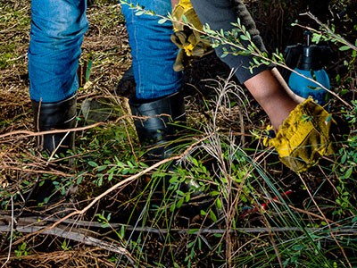 Next steps to rid the Overberg of invasive plants