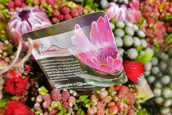 Here's how YOU and Pick n Pay are conserving Fynbos