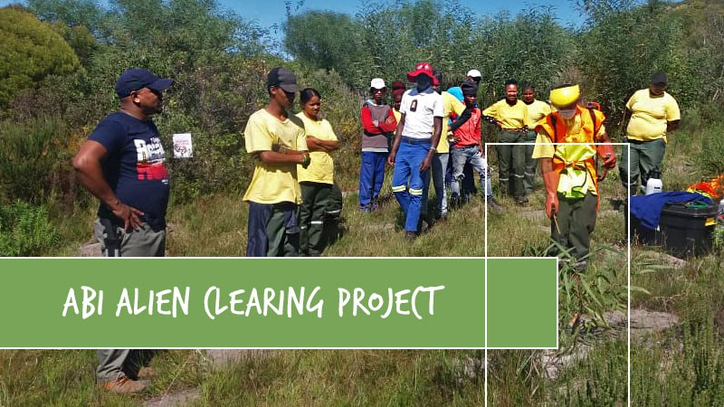 Flower Valley is recruiting a service provider to evaluate the Agulhas Biodiversity Initiative's (ABI) Invasive Alien Clearing Project