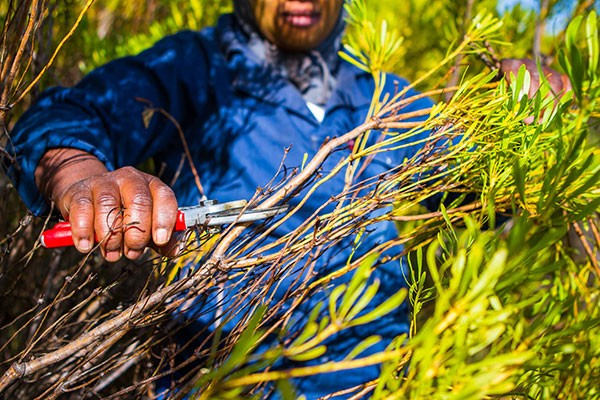 Coronavirus and fynbos: How we're dealing with the crisis