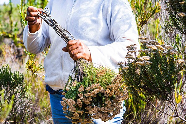 Does fynbos training really make a difference?
