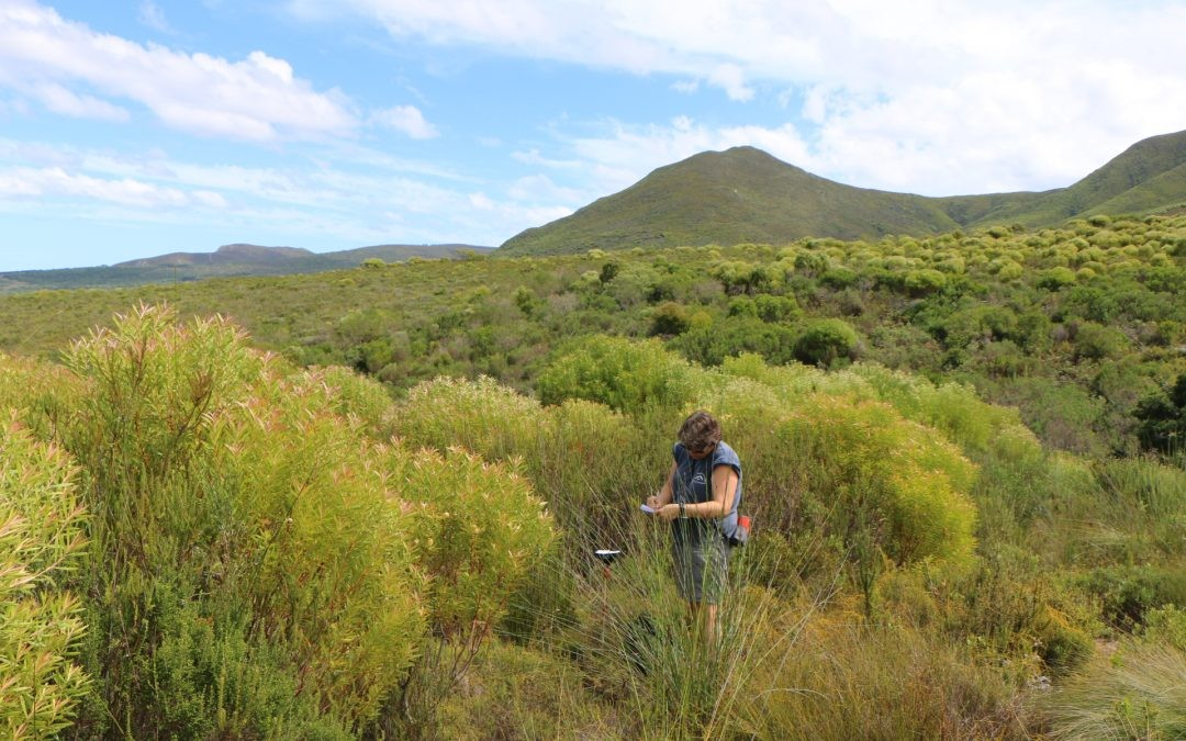 Exploring and understanding fynbos systems through research